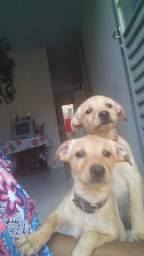 Doando dois cachorro