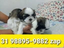 Título do anúncio: Canil Filhotes Cães Líder BH Shihtzu Poodle Maltês Basset Lhasa Yorkshire