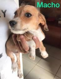 Filhotes de cachorro para doação