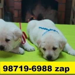 Canil Filhotes Cães Premium BH Labrador Pastor Akita Boxer Rottweiler Golden