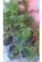 Vendo mudas de plantas