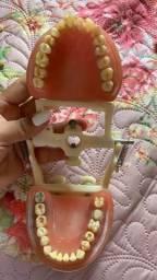Manequim odontologico de materiais dentario completo