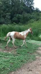 Wilson lindo cavalo pra criança