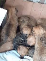 Cachorrinhos abandonados