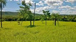 Excelente fazenda, pecuária intensiva, 174.24hec. - Formosa - GO