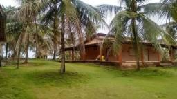 Chácara no Município de Alhandra com 30 hectares toda plantada de coco produzindo