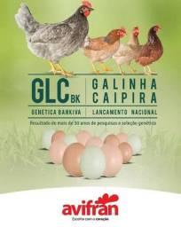 Ovos galados galinha glc avifran