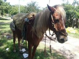 Vendo cavalo com cela completo mais carroça