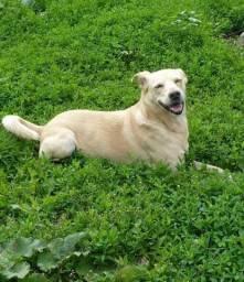 Procura_se nosso cachorro branco vira lata