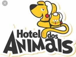Hotel para cães & gatos