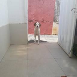 Cachorra para Guarda