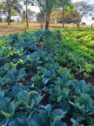 Horta hortaliças verduras agroecológicas