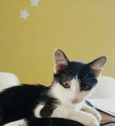 adoção de uma gatinha tem 4 meses