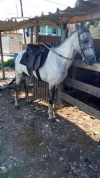 Troco ou vendo por cavalo ou égua
