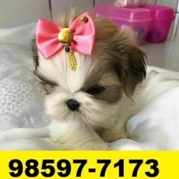 Canil Filhotes Cães Lindos BH Shihtzu Maltês Lhasa Bulldog Basset Yorkshire
