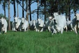 Fazenda de 950 hectares no Cantá, ler descrição do anuncio
