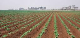 Fazenda em Araxá 387 hectares 25.000.000.00