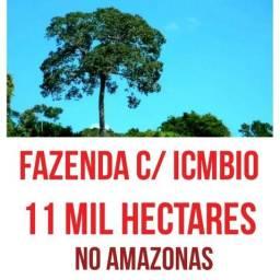 Fazenda com 11 mil hectares com certificado no Icmbio, bioma amazônico,