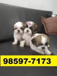 Canil Filhotes Cães Pet Líder BH Shihtzu Maltês Pug Yorkshire Basset Lhasa Beagle