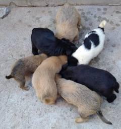 Doa-se filhotes