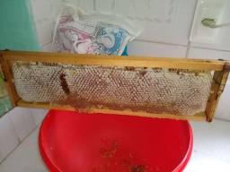 Apicultura ( abelhas européias) leia por favor