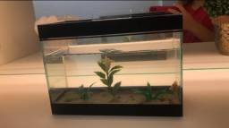 Aquário 4L peixe Betta + Aquecedor + Termostato