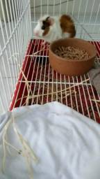 5a3842158a Gaiola - Hamster e Porquinho da Índia