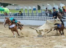 Cavalo de Esquerda vaquejada