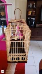 Vendo uma gaiola preseira de violeta preta com marfim essa gaiola tem 27 malha valor 500