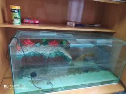 Aquario para tartarugas