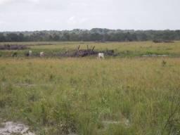 Fazenda em Barras Piaui