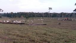 Fazenda de 165 hectares em Capixaba - Acre
