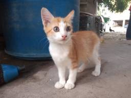 Jovem gatinha para adoção!