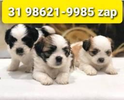 Título do anúncio: Cães Filhotes Premium BH Lhasa Yorkshire Basset Shihtzu Beagle Poodle Maltês