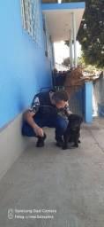 Título do anúncio: PC Adestramento Canino...