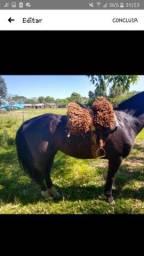 Cavalo Crioulo Puro Registrado Confirmado Castrado bem mansinho Aceito Cartao