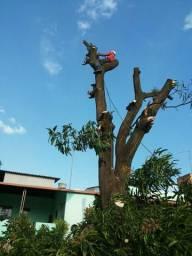 Poda e corte/supressão de árvores em Betim