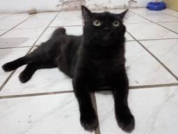 Doa-se gatinho lindo!!!