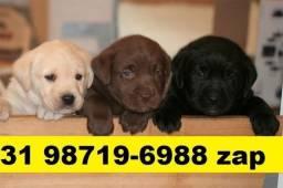 Canil Filhotes Cães Belíssimos BH Labrador Pastor Akita Rottweiler Golden