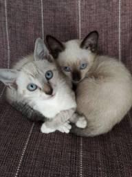 Dois gatinhos para doação
