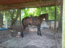 Égua ( Vendo ou troco algo  meu interesse)