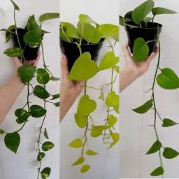 Título do anúncio: Planta Jiboia R$13 Espadinha R$7