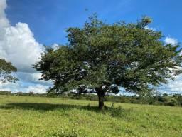 Chácaras há venda em nova Fátima 38 km de Goiânia