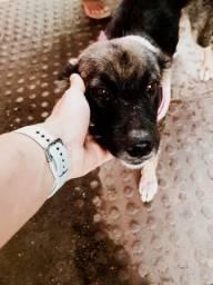 Adoção Doação Cachorra Cachorro