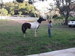Cavalo pampa top