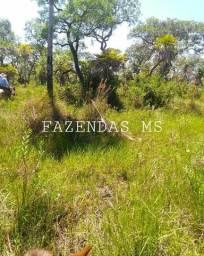 1.800 hectáres corumba pantanal de nabileque parte alta