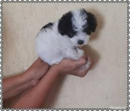 Poodle micro toy