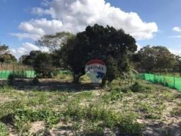 Sítio à venda, 3200 m² por R$ 85.000 - Sitio Borges - Garanhuns/Pernambuco
