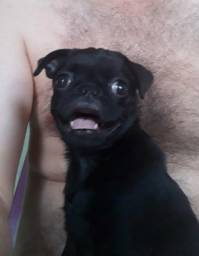 Casal de Pug