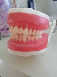 Manequim odontológico de dentistica